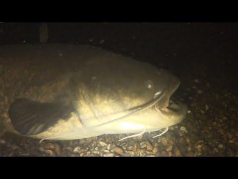 Ночная Подводная Охота. Река Днепр 2018