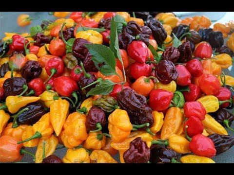 Garden Harvest 2017   CaribbeanPot.com