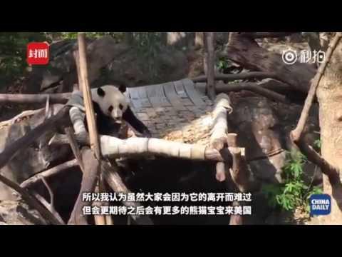 Giant Panda BAO BAO arrives in China