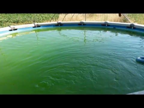 Recuperacion el agua verde de la piscina fontyreg youtube - Agua de la piscina turbia ...
