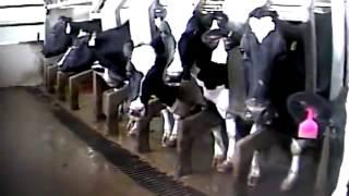 HEBOH.................!!!!!!!!!!! Video Pengolahan Daging untuk Restoran Siap Saji