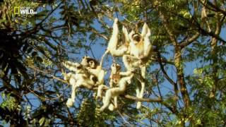 Мадагаскар. Легенда острова лемуров 2015г.