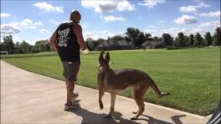 German Shepherd Bella's Board & Train Video At Cincinnati Dog Trainers Off Leash K9