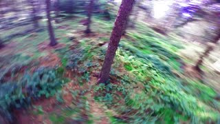 Go with the flow [Forest FPV]