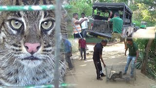 Fishing cat rescued from well !