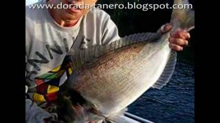 dorada-tanero 3ª pesca dorada.peche dorade.fishing orata..wmv