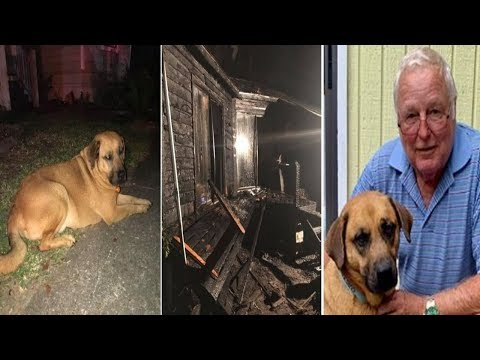 Maverick - Vietnam Veteran Saved from Fire by Rescue Dog