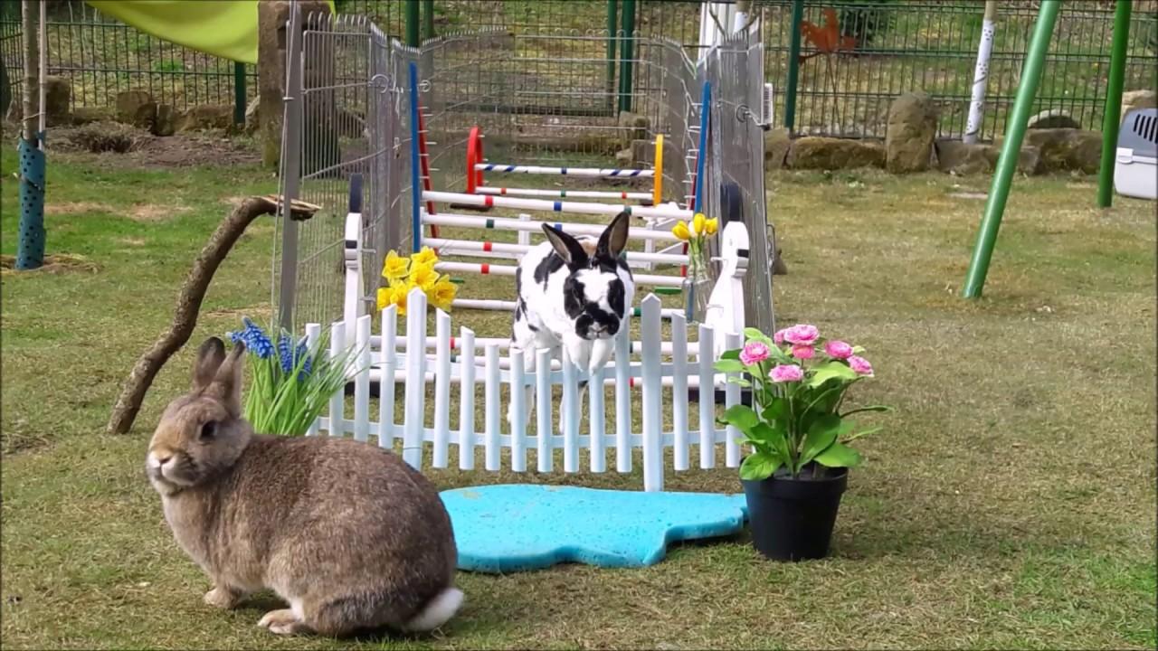unser freigehege auslauf gehege f r unsere kaninchen. Black Bedroom Furniture Sets. Home Design Ideas