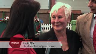 Highlights of Welsh Kennel Club 2012