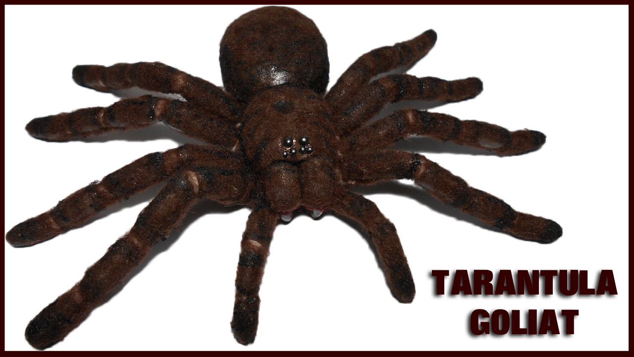 Tarantula Goliath Polymer Clay Tutorial | Porcelana Fría ...