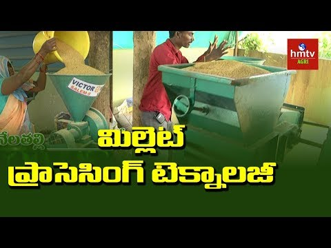 Millet Processing Units at Turkapally | Organic Millet Cultivation | hmtv Agri