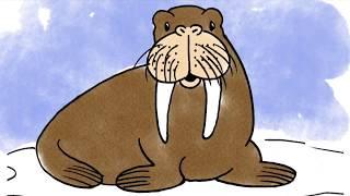How to draw a cartoon Walrus