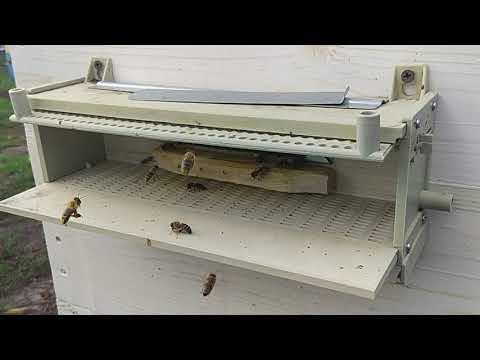 Полёт пчелы(медленно)