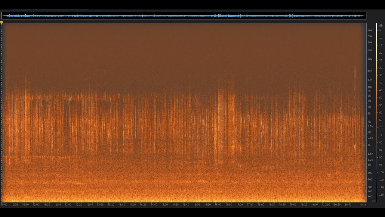 Evening Meadow: Sequoia National Forest, California | Spectrogram Follow