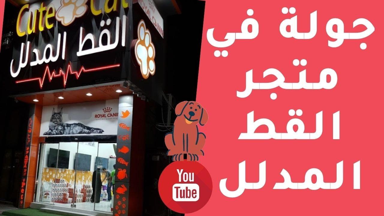 جولة في متجر القط المدلل بحي الملقا مدينة الرياض Cute Cat Store Youtube