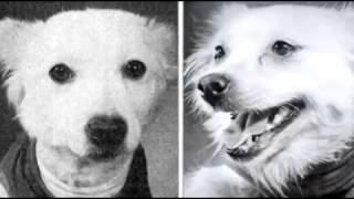 Собаки плачут