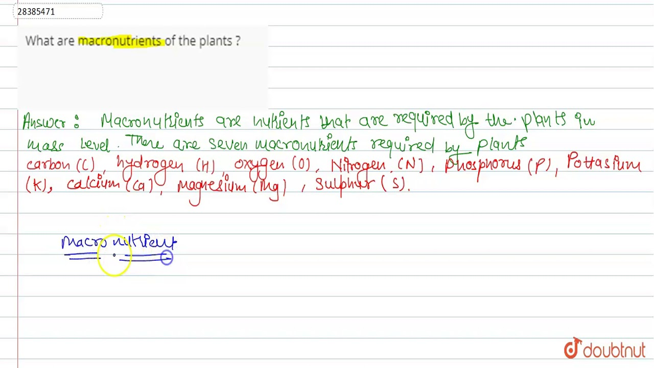 What Are Macronutrients Of The Plants Youtube