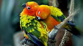 Красивые птицы / на такие картинки с птицами приятно смотреть