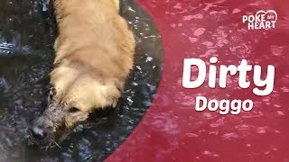 Dog Swims in Giant Mud Puddle