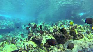 Swims With Fishes 2013-2; gopro hero 3 - 2.7k underwater