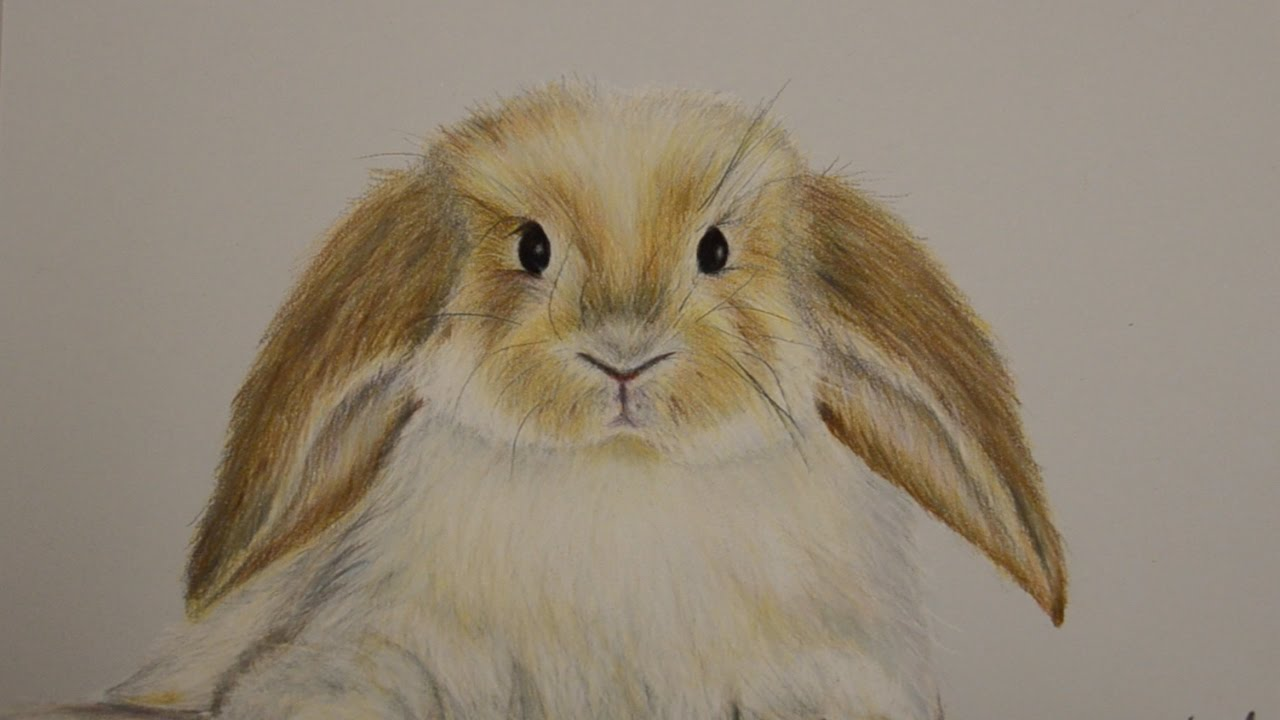 how to draw a realistic rabbit face step by step