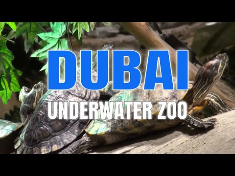 DUBAI MALL AQUARIUM & UNDERWATER ZOO – part 1 of 2