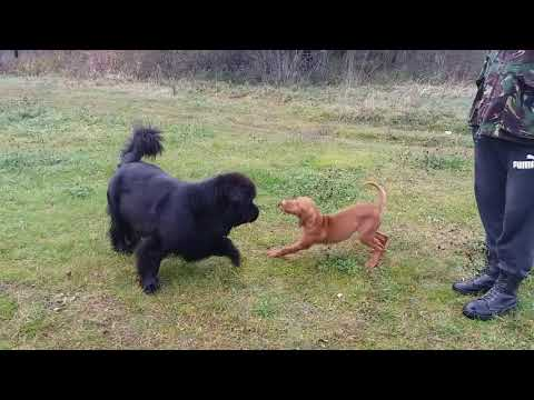My newfie with a new friend