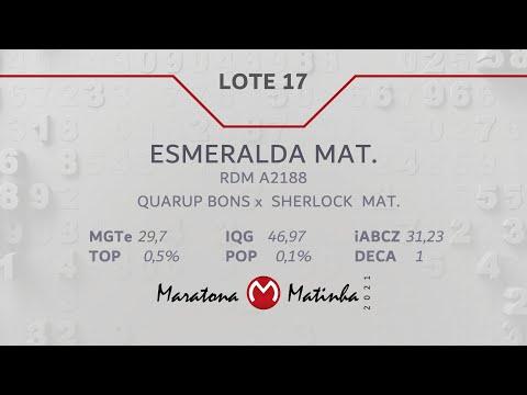 LOTE 17  Maratona Matinha