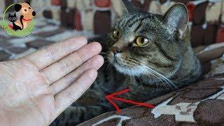 Линька у кошки. Почему кошка сильно линяет?