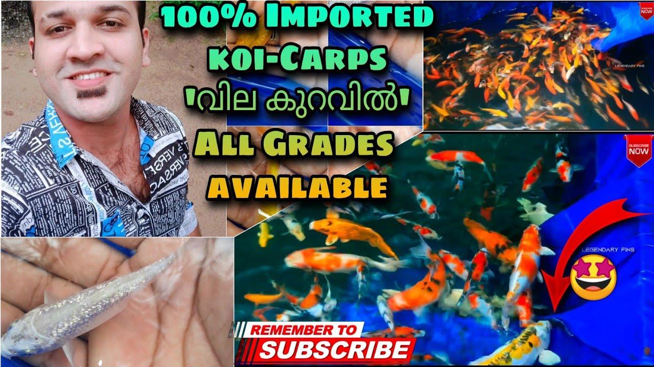 ഇത്രേം വെല്യ ഒരു IMPORTED KOI-CARP FARM കേരളത്തിന് സ്വന്തം|keralakoicarp farm|legendaryfins