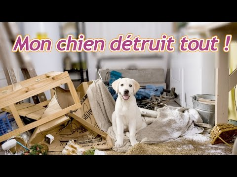 mon chien d truit tout en mon absence que faire youtube. Black Bedroom Furniture Sets. Home Design Ideas