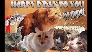 Kucing Selamat Ulang Tahun Special Buatmu (Cat Sing Happy Birthday)