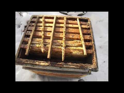 Работа с пчелами видео онлайн встречные сделки на форекс