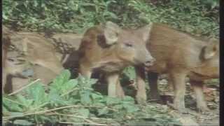 Les Animaux d'élevage et Nous
