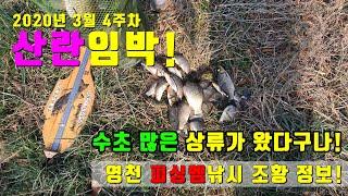 3월 넷째주 조황 정보 '산란임박'