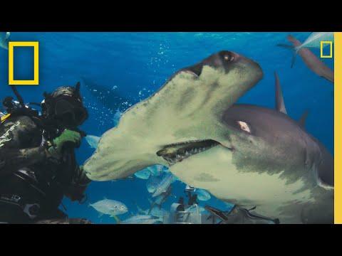 Shark-Beach-with-Chris-Hemsworth-Shark-Beach