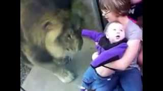 Zoo Animals Gone Wild Compilation. they lucky because of the hard glass.