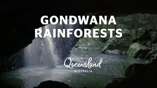 Gondwana Rainforests, Queensland's 5 World Heritage Sites