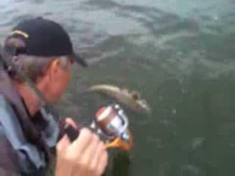 ловля сома в краснодарском водохранилище