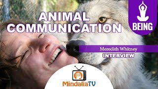 Animal Communication, Interview with Meredith Whitney