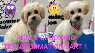 CUTEST SHIH POO PUPPY AMAZING TRANSFORMATION AFTER GROOMING