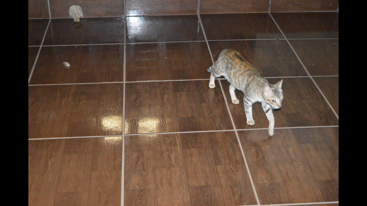 Como limpar piso de cer mica f cil dica do dia para dona - Como blanquear el piso de ceramica ...