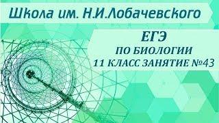 ЕГЭ по биологии  Занятие 43  Уровни организации живой материи