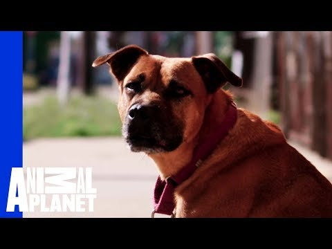 Waiting for a Forever Home: Gemmill | Pit Bulls & Parolees