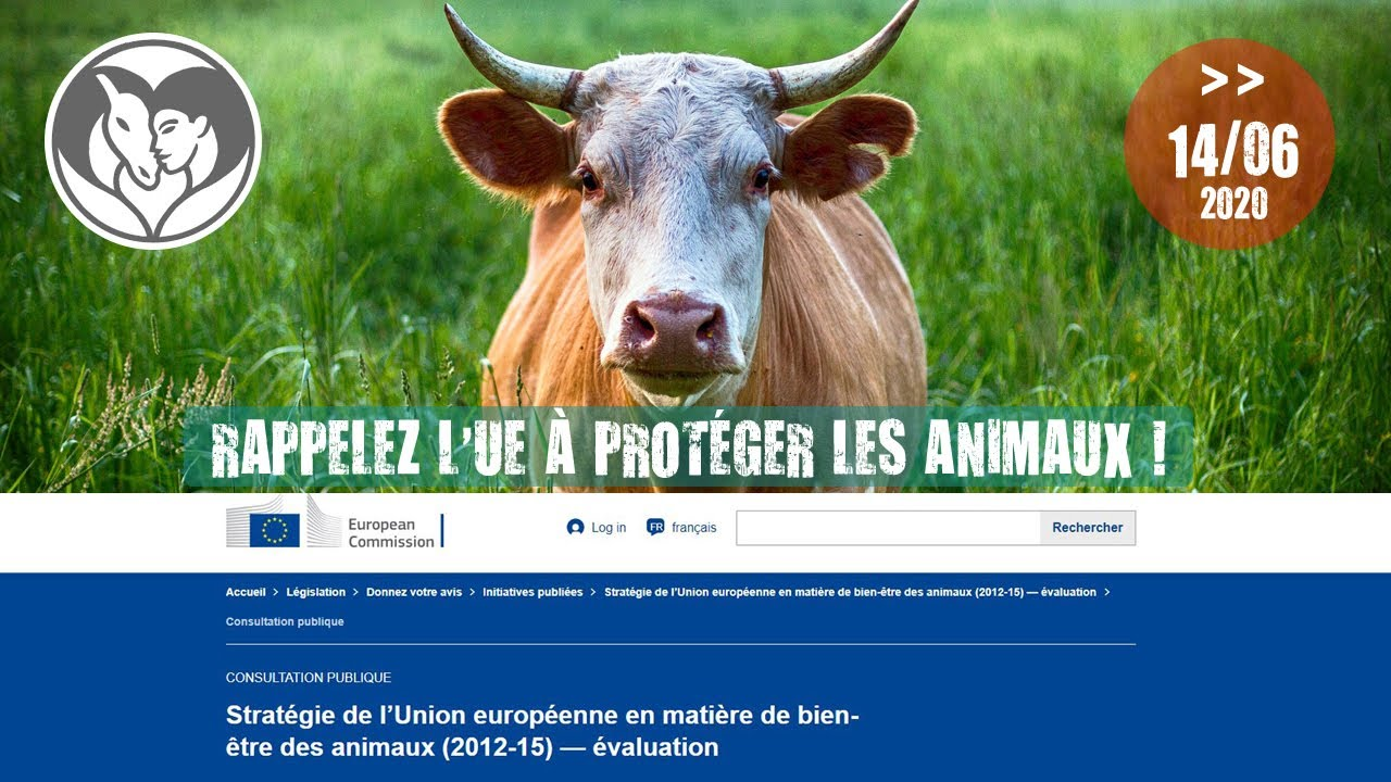 Demandez à l'UE plus d'engagement pour les animaux !