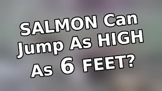 Salmon can jump as high as 6 feet? | Funny Facts