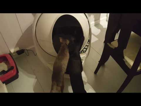 Cat toilet robot litter III oriental cats