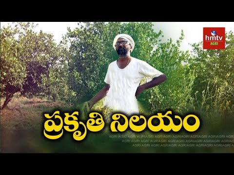 Zero Budget Natural Farming   Vikarabad Farmer Vijay Ram Natural Farming Tips   hmtv Agri