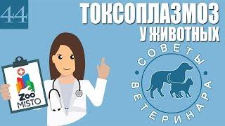 Токсоплазмоз у животных | Что такое токсоплазмоз | Симптомы токсоплазмоза | Советы Ветеринара