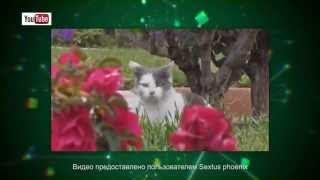 Кошки в сети От кошек дом кувырком